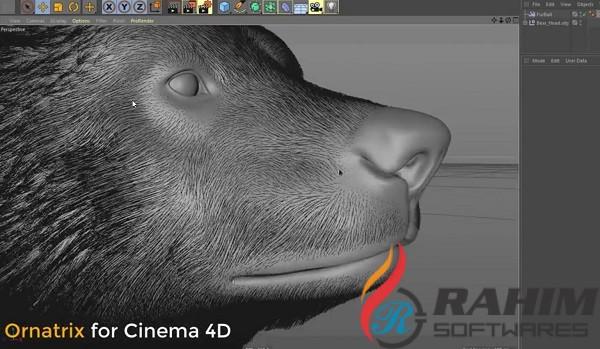 Ornatrix 1.0 Plugin for Cinema 4D Free Download